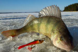 March 19th, Lake Winnie Fishing Report